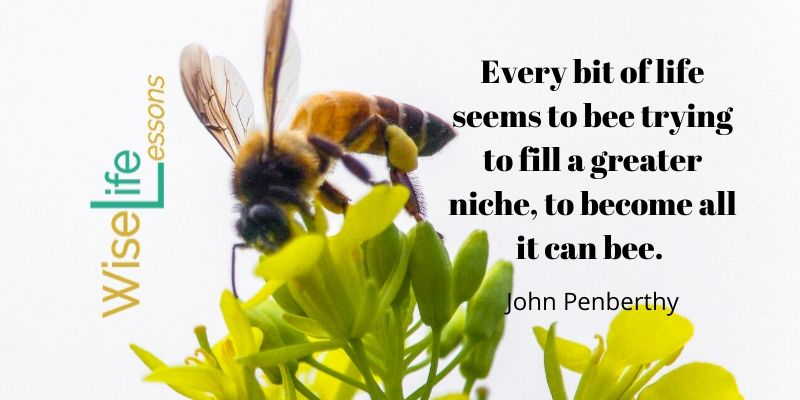 Every bit of life seems to bee trying to fill a greater niche, to become all it can bee.